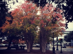 Loving the view of fall leaves from the #palafoxhouse! #downtownpensacola #upsideofflorida #venue #palafoxstreet