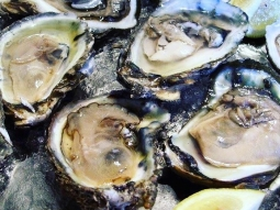 Oysters, oysters, oysters ?Monday night is Oyster Night at Atlas! Come see us TONIGHT to get your first dozen raw oysters for only 25 cents each! #downtownpensacola #oyster #upsideofflorida #lovefl #pensacolarestaurant